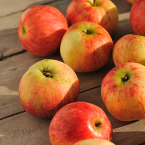 TECT Trip to the National Apple Harvest Festival - CANCELED