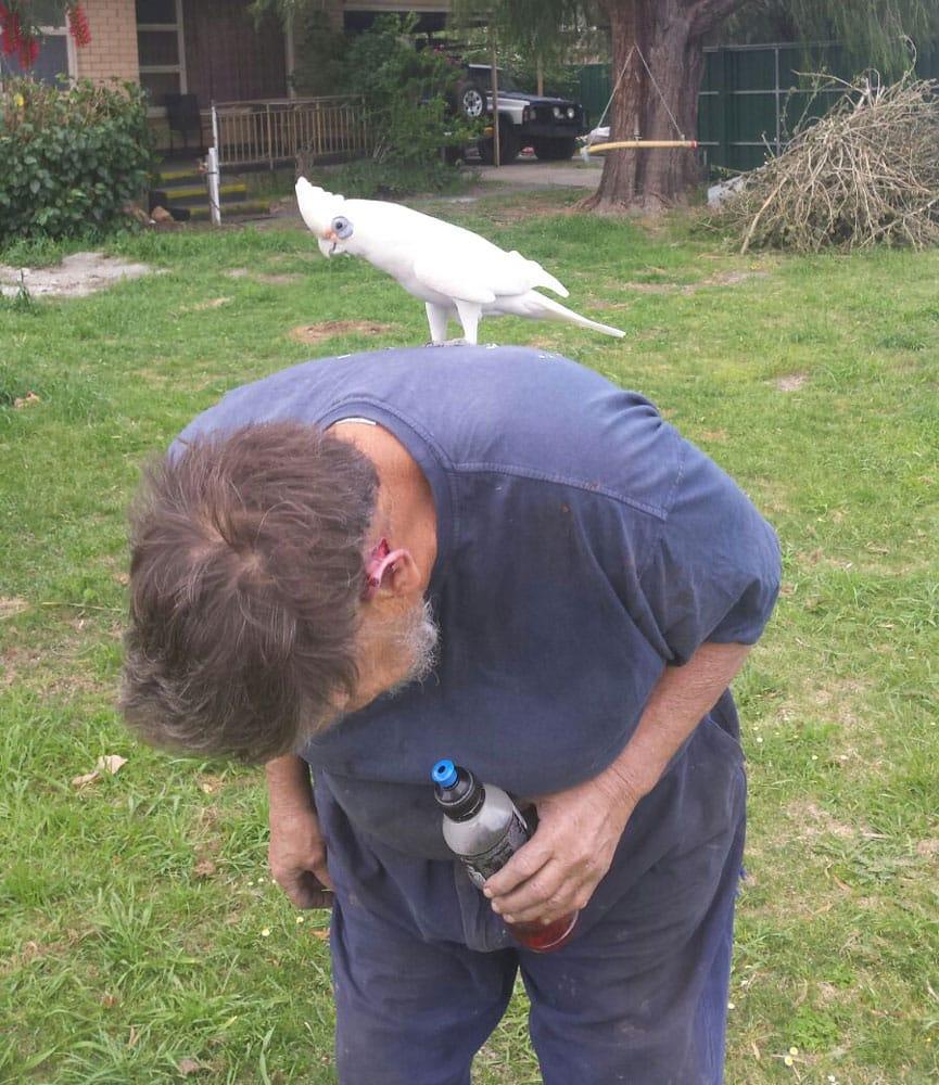 homme-oiseaux