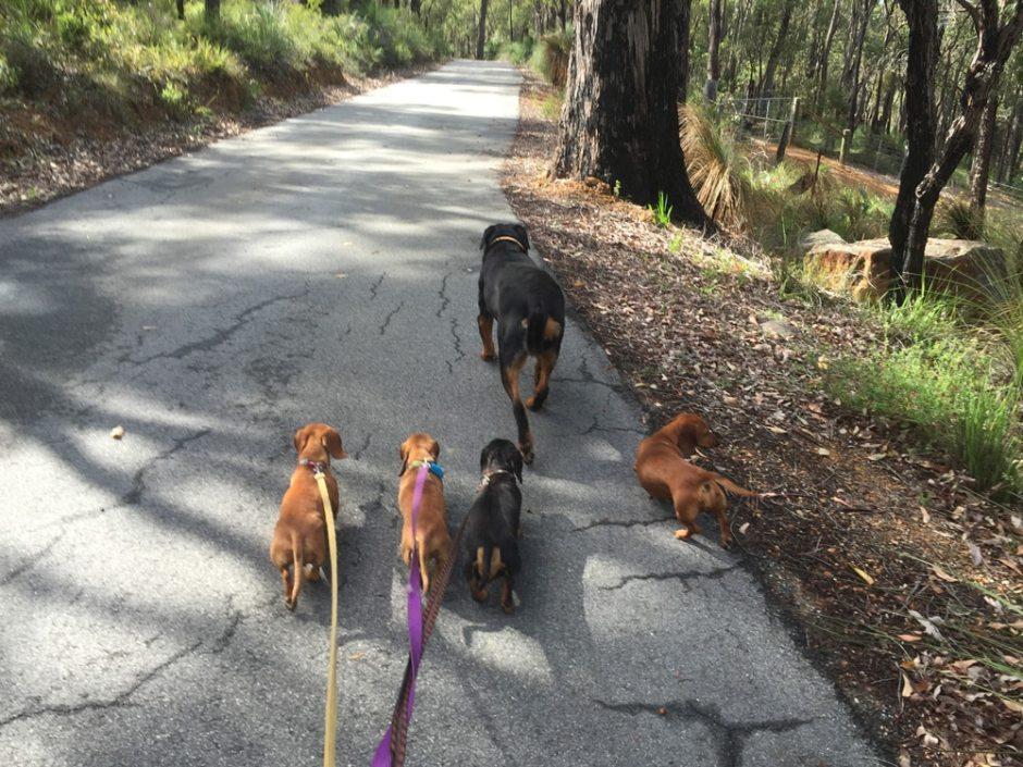La balade des chiens heureux