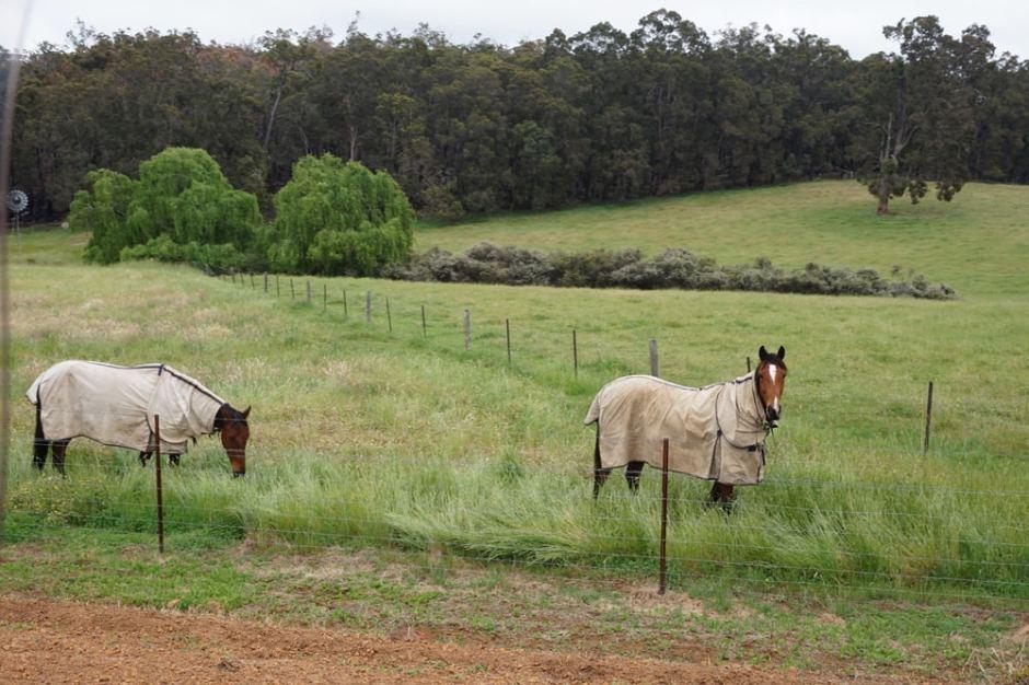 chevaux-habilles