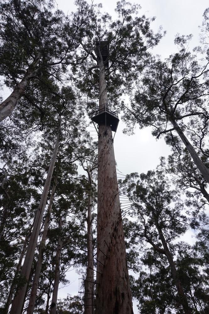 L'arbre vue du vas