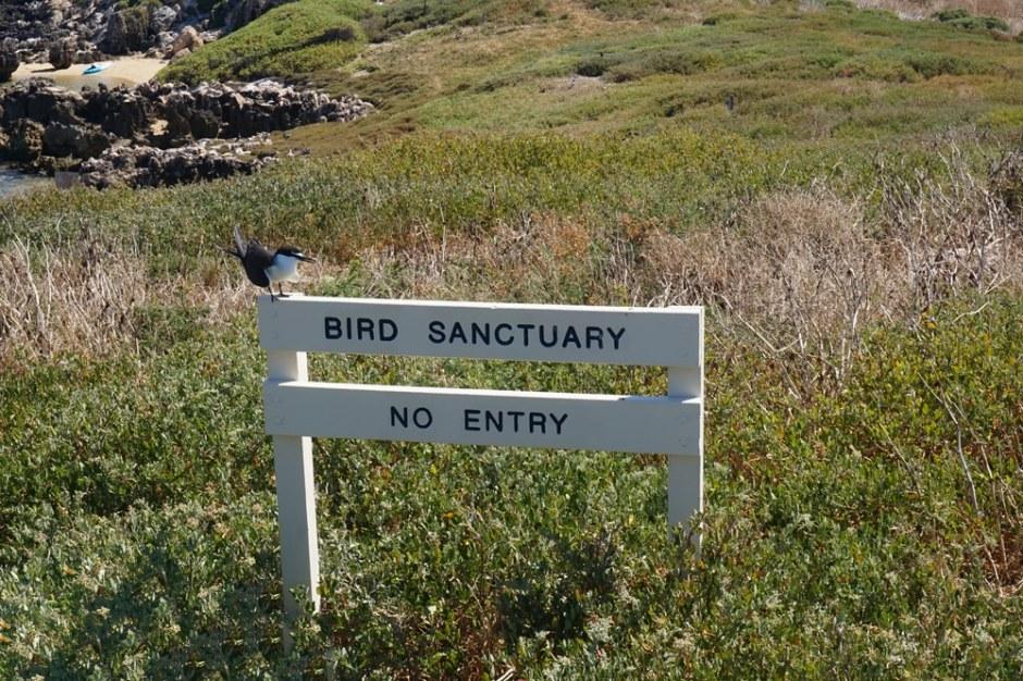L'oiseau sur son panneau, excellent :)