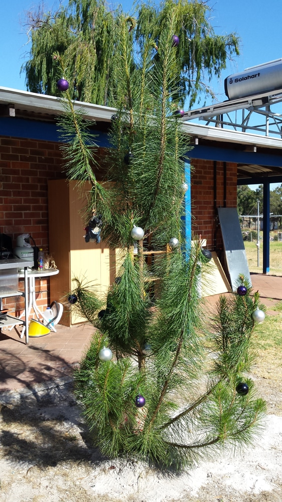 christmas-tree-caravan-park