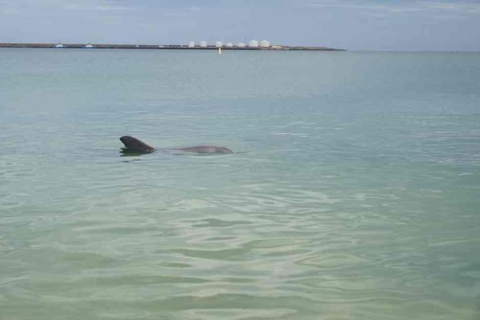 Le dauphin à quelques mètres