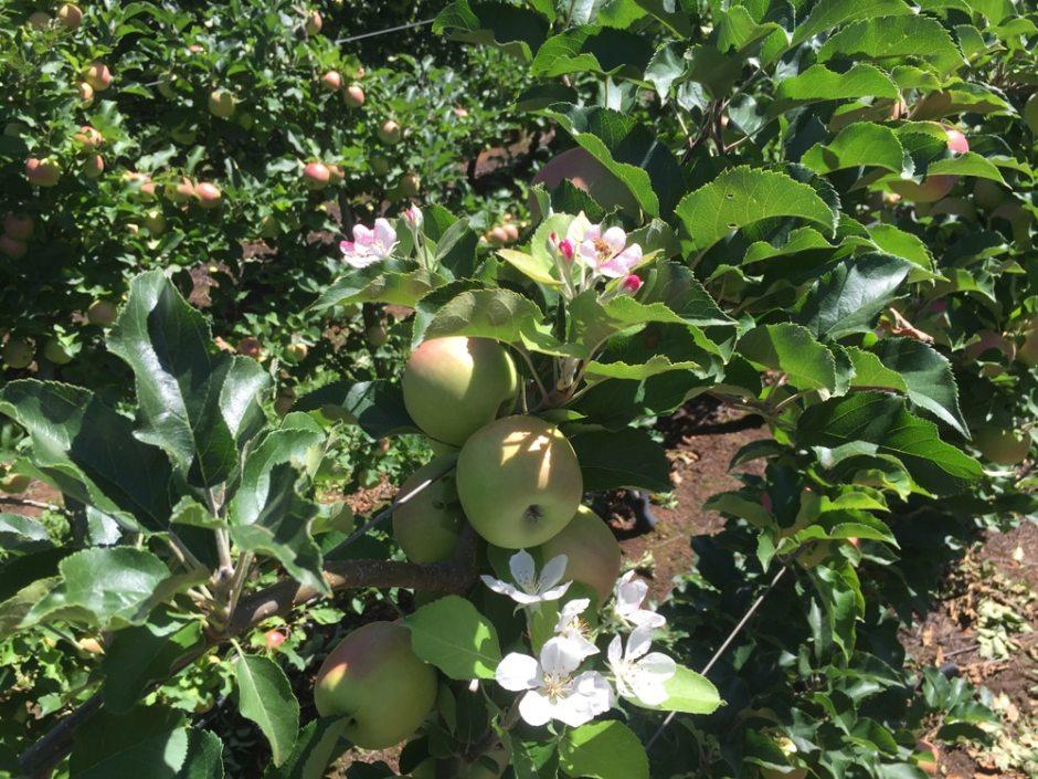 pruning-flower