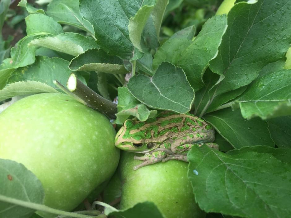 pruning-frog-4