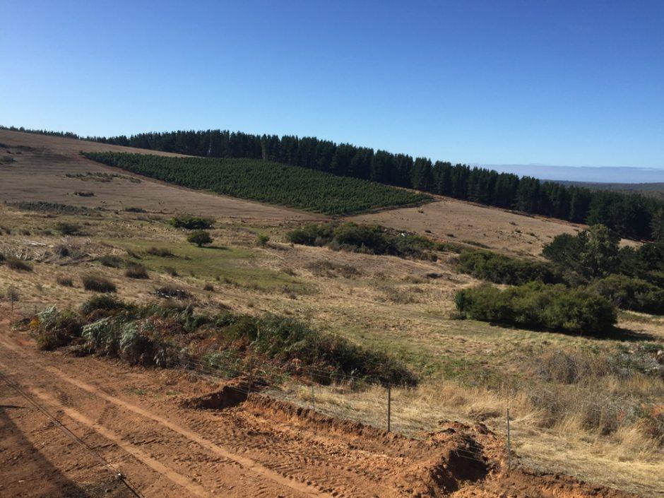 pruning-view