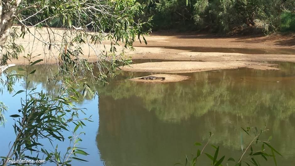 big-crocs