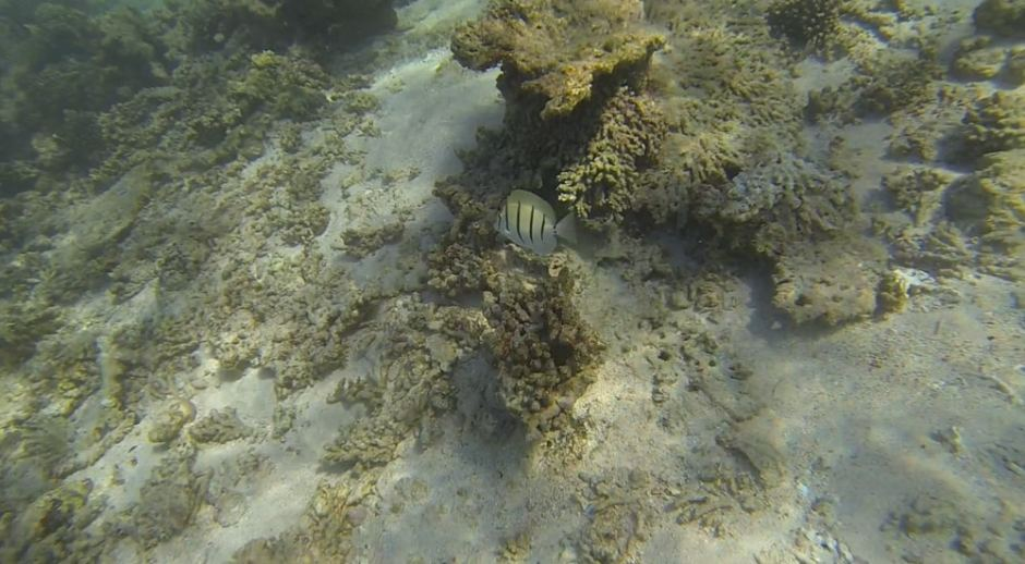 oyster-stacks-snorkelling-5