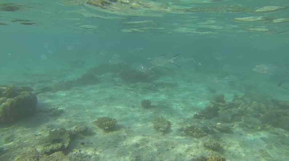 oyster-stacks-snorkelling-7