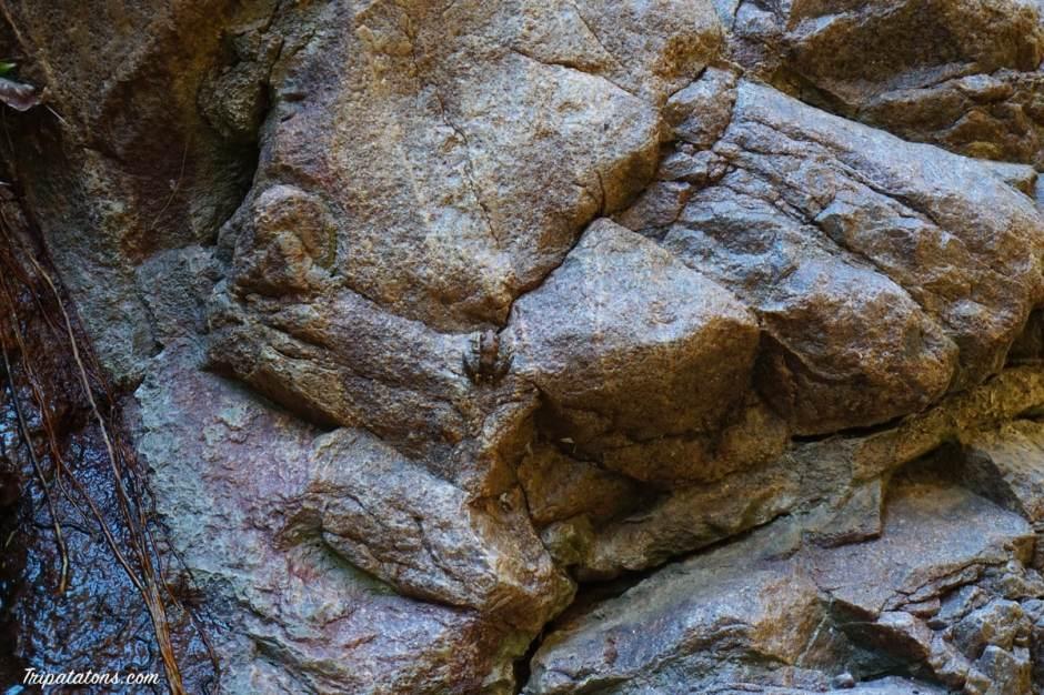 el-questro-gorge-frog