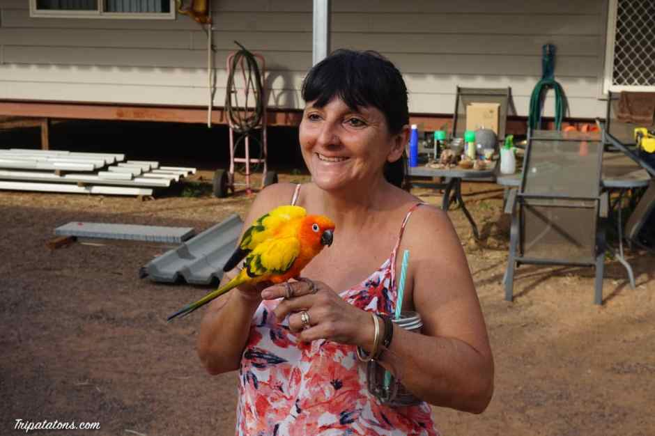 kangaroo-haven-parrot