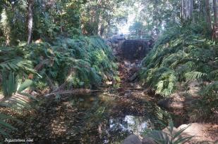 botanic-gardens-2