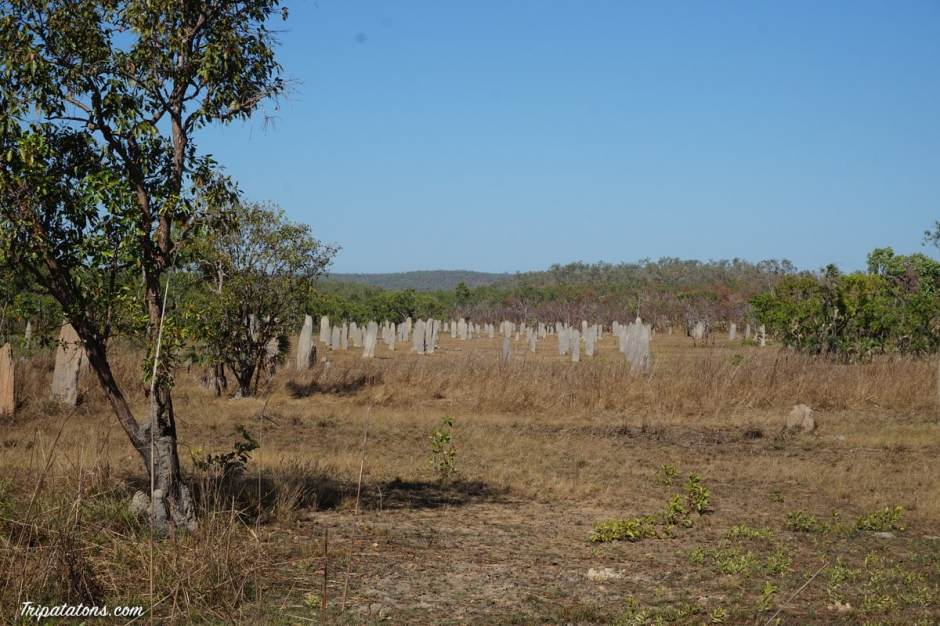 magnetic-termite-mounds-1