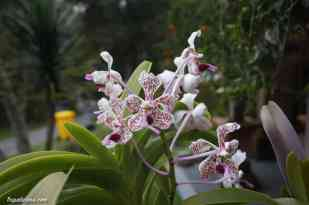 botanic-garden-bali-5