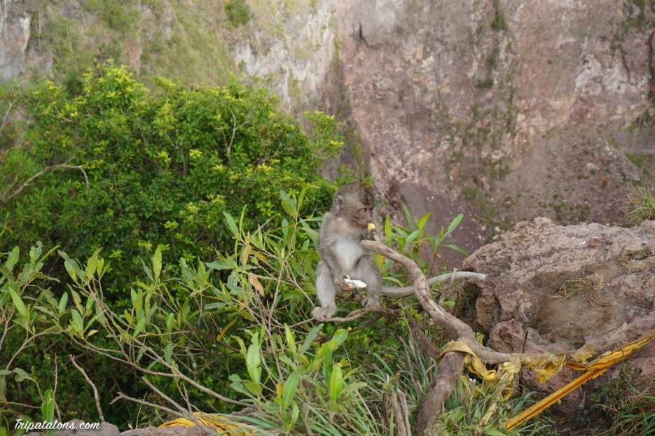 mount-batur-summit-monkey-6