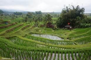rice-terrace-jatiluwih-5