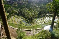 tegallalang-rice-terraces-7