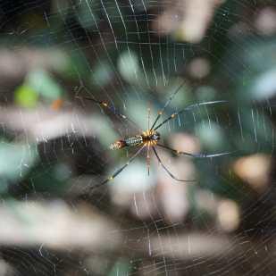 une autre araignée