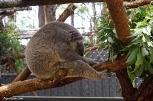 koala hospital (3)