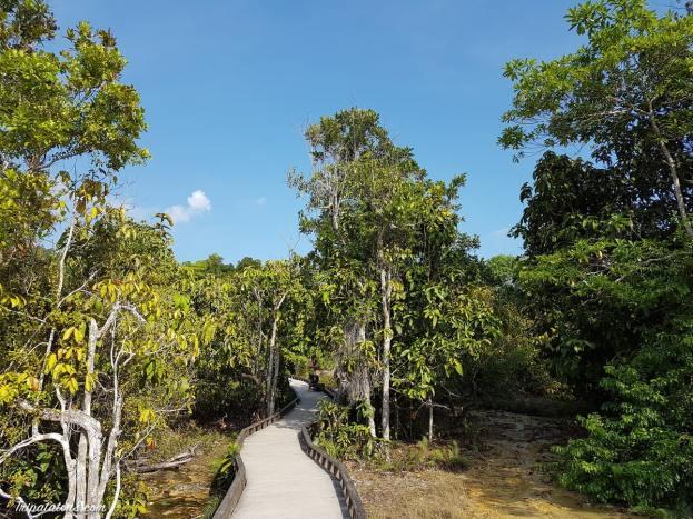 esmerald-pool-jungle-1
