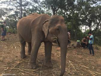 feed-elephants-1