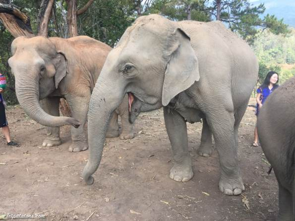 feed-elephants-2