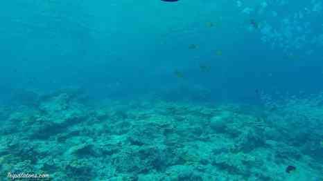 plongee-11