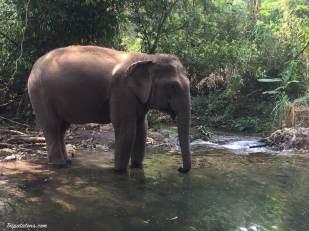 river-elephants-2