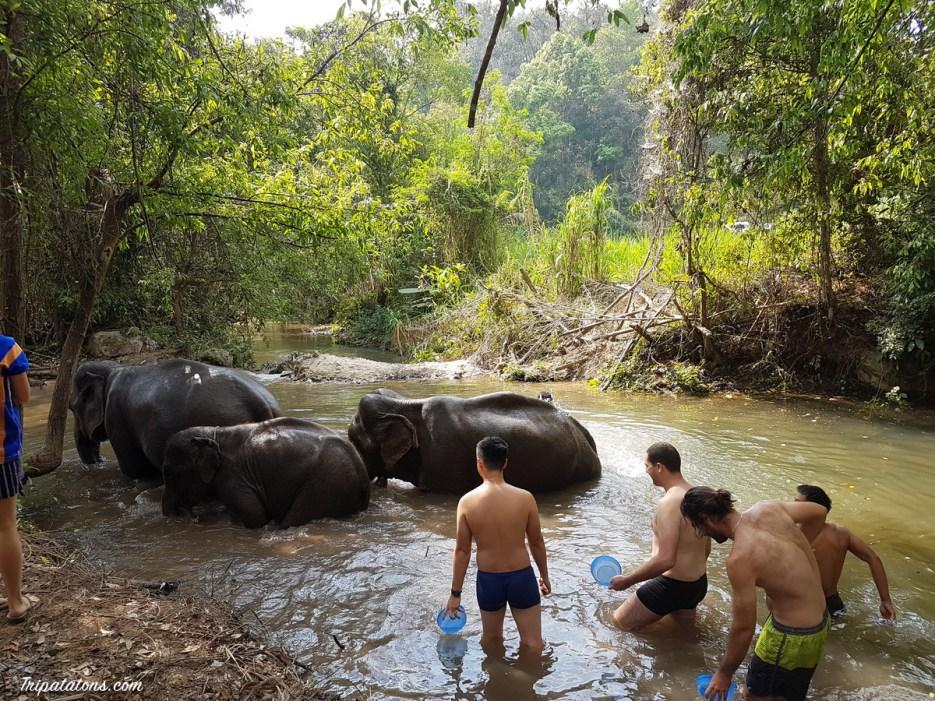 river-elephants-3