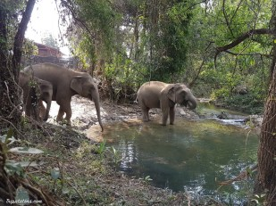 river-elephants-4