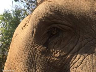 walk-elephants-2