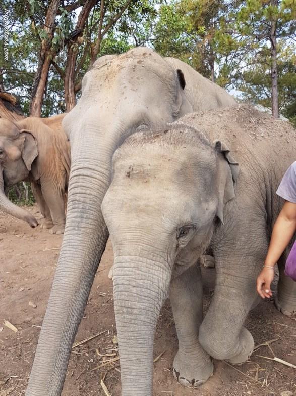 walk-elephants-7