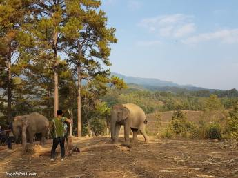 walk-elephants-8