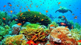 Tourist Places To Visit In Cairns