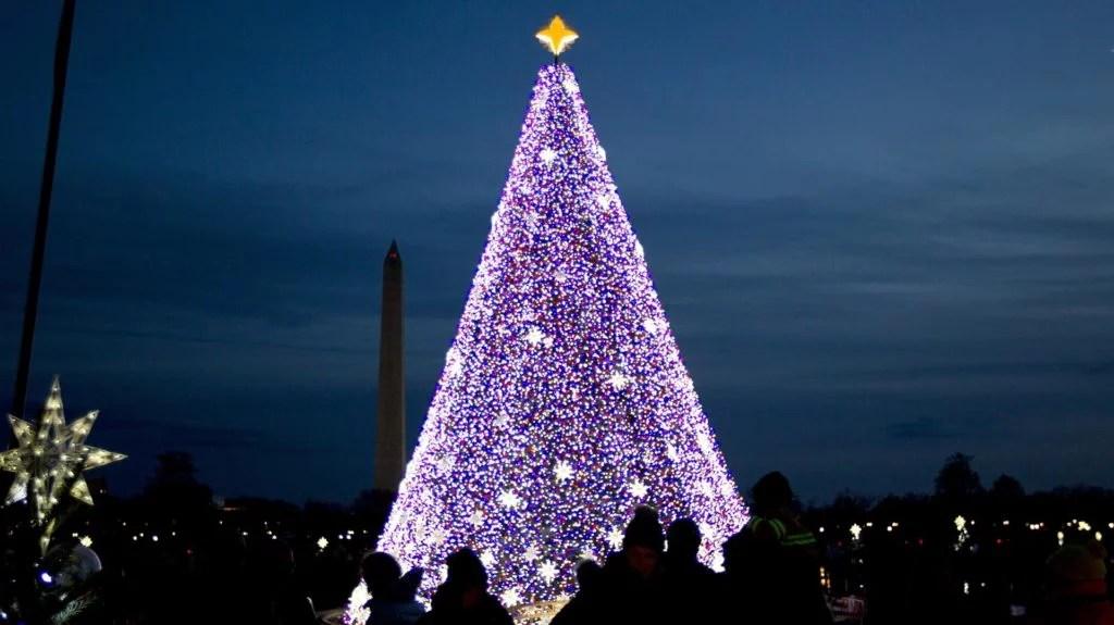 Best 20 Christmas Trees Around The World