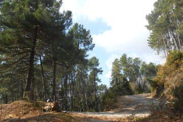 foresta del monte brugiana