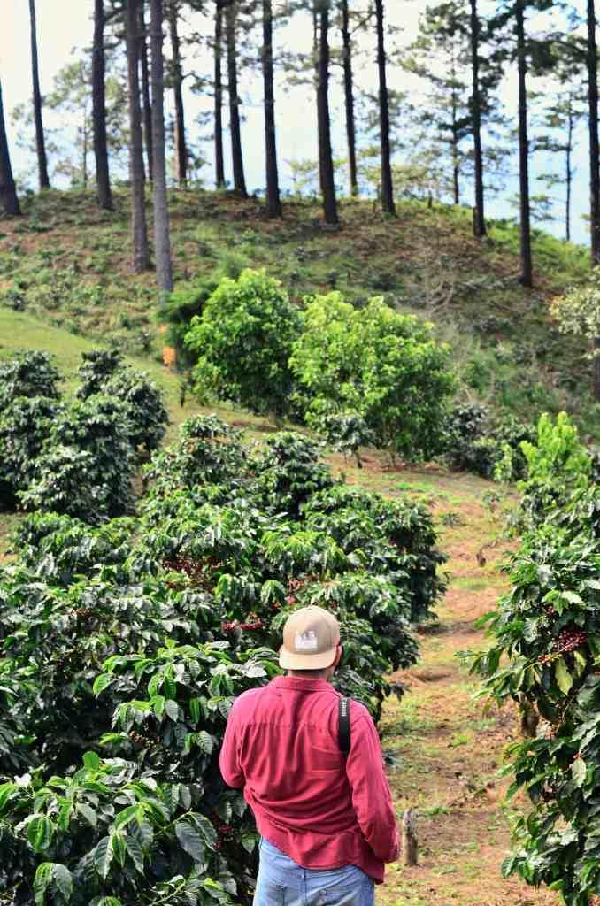 Touring a Coffee Farm