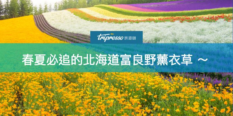 【 北海道薰衣草 】時尚迷幻紫色代表!春夏必追的富良野薰衣草~