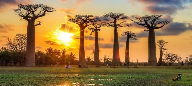 馬達加斯加旅遊