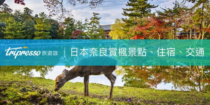 【日本奈良紅葉最前線】奈良自由行、賞楓熱點、交通、飯店看這篇!