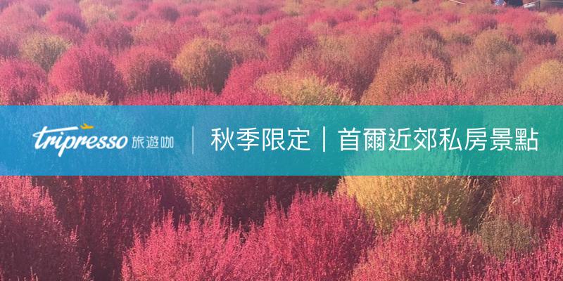 【韓國秋天限定】首爾近郊必去賞掃帚草、粉黛亂子草私房景點