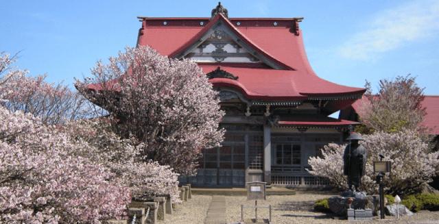北海道賞櫻