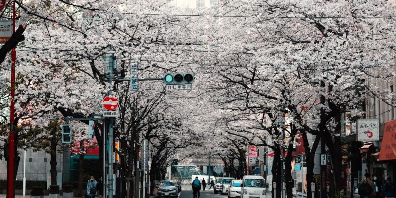 【世界櫻花趣】不只日韓,全球十大熱門賞櫻城市精選