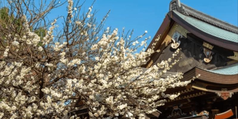 【漫步日本東京】新東京景點:文京區賞花囉!文京花五大祭