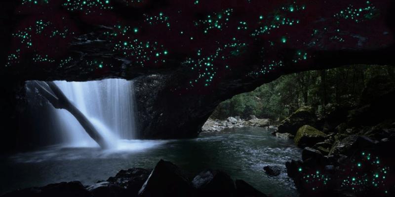 螢火蟲星光超浪漫!泰國、馬來西亞、紐西蘭、澳洲賞螢景點推薦