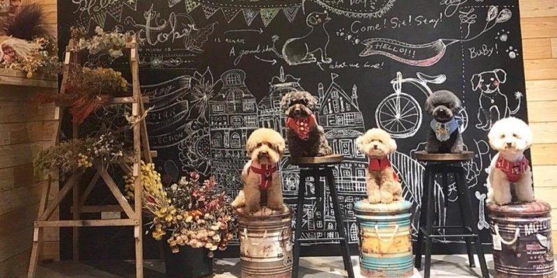 台北&新北寵物友善餐廳/寵物餐廳推薦:一起帶上狗狗、貓咪到餐廳度過好食光!