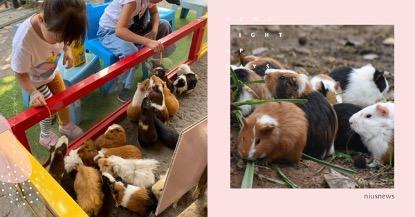 《天竺鼠車車》霸權來到!想看天竺鼠本尊嗎?這 8 間動物園和農場必去