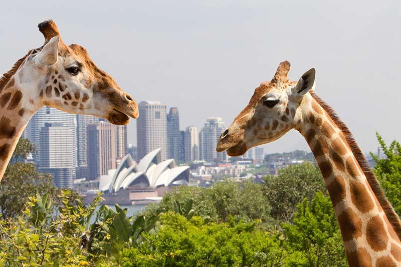Sydneys Taronga Zoo