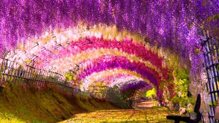 Wisteria Flower Tunnel, Kitakyushu, Japan